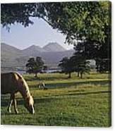 Horse Grazing On A Landscape Canvas Print