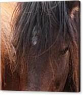 Horse Hair 2 Canvas Print