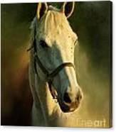 Horse Head Portriat Canvas Print