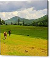 Horse Heaven Canvas Print