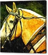 Horse In Paint Canvas Print