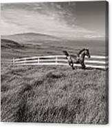 Horse In Pasture Canvas Print