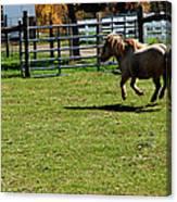 Horse Jump Canvas Print
