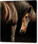 Horse Looking Over Shoulder Canvas Print