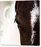 Horse Mare Saskatchewan Field Canvas Print