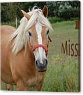 Horse Miss You Canvas Print