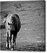 Horse Moves 10 Canvas Print