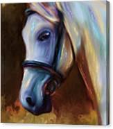 Horse Of Colour Canvas Print