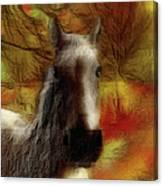 Horse On The Farm Canvas Print