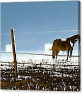 Horse Pasture Revdkblue Canvas Print