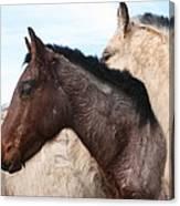 Horse Pileup Canvas Print