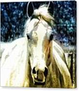 Horse Sense Canvas Print