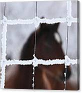 Horse Viewed Through Frost Covered Wire Fence Canvas Print