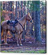 Horse Waiting For Rider Canvas Print