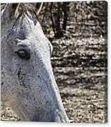 Horse With No Name V3 Canvas Print
