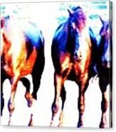 Horses-30 Canvas Print