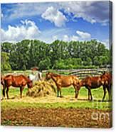Horses At The Ranch Canvas Print