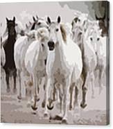 Horses Galloping Canvas Print