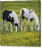 Horses Grazing, County Tyrone, Ireland Canvas Print