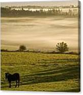 Horses In The Morning Mist, North Canvas Print