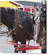 Horses Of Mackinac Canvas Print