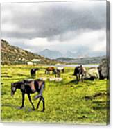 Horses Of Wyoming Canvas Print