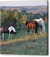 Horses On The Range Canvas Print