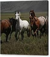 Horses Run Free Canvas Print
