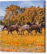 Horses Running Free Canvas Print