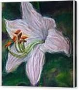 Hosta Bloom Canvas Print