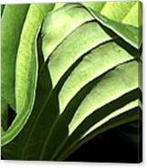 Hosta Leaf Canvas Print