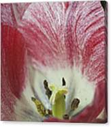 Hot Lips Canvas Print
