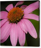 Hot Pink Coneflower Canvas Print
