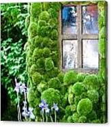 House With Moss Walls Canvas Print