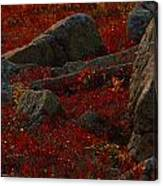 Huckleberry Bushes And Multi-hued Canvas Print