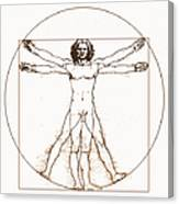 Human Body By Da Vinci Canvas Print