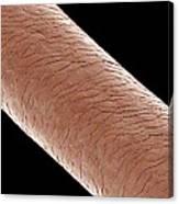 Human Hair, Sem Canvas Print