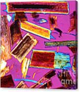Human Hair Stubble Canvas Print