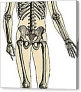 Human Skeleton Canvas Print