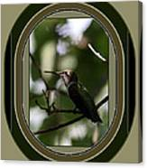 Hummingbird - Card - Glint Of The Eye Canvas Print