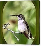 Hummingbird - Gold And Green Canvas Print