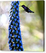 Hummingbird And Flower Canvas Print