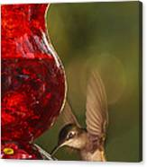Hummingbird At The Feeder Canvas Print