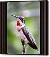 Hummingbird Card Canvas Print