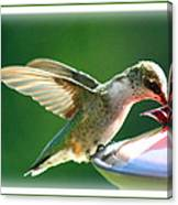 Hummingbird Eating Canvas Print