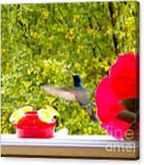 Hummingbird In Cuenca Ecuador Vii Canvas Print