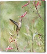 Hummingbird Nourishment Canvas Print