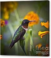 Hummingbird On Guard - Artist Cris Hayes Canvas Print