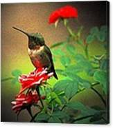Hummingbird On The Rose Canvas Print