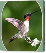 Hummingbird Photo - Light Green Canvas Print